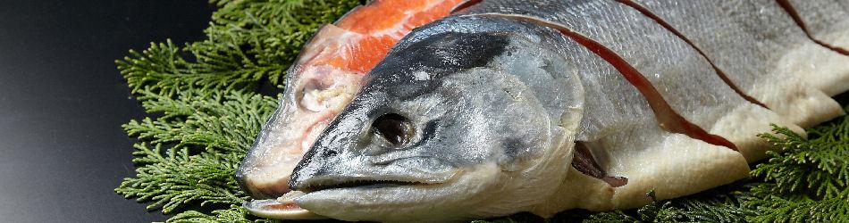 黑門承諾Sampei鹽漬鮭魚
